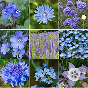 David's Garden Seeds Wildflower Singing The Blues Mix SL3111 (Blue) 200 Non-GMO, Open Pollinated Seeds