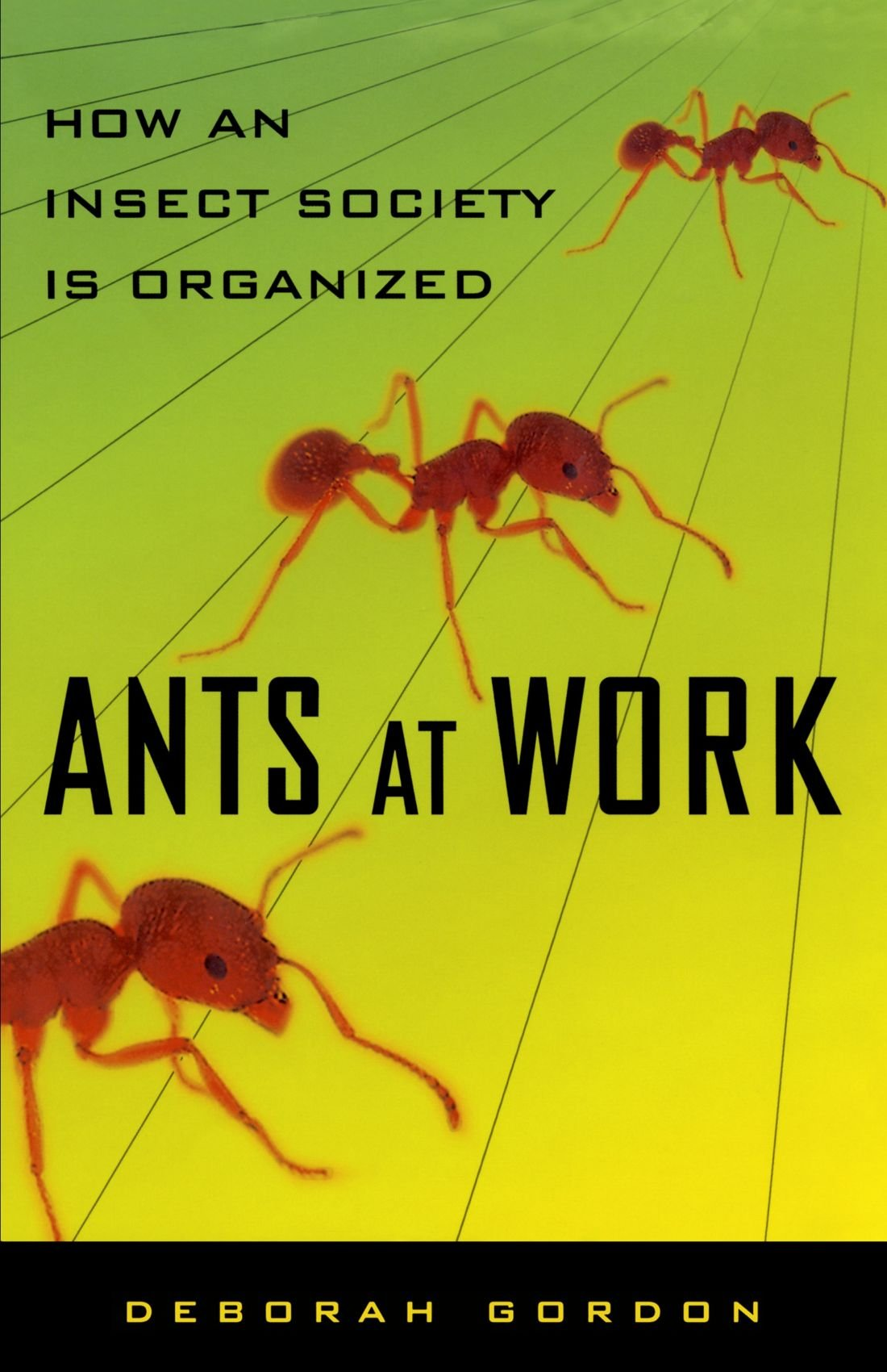 Sly struggle with garden ants. Practical advice 73