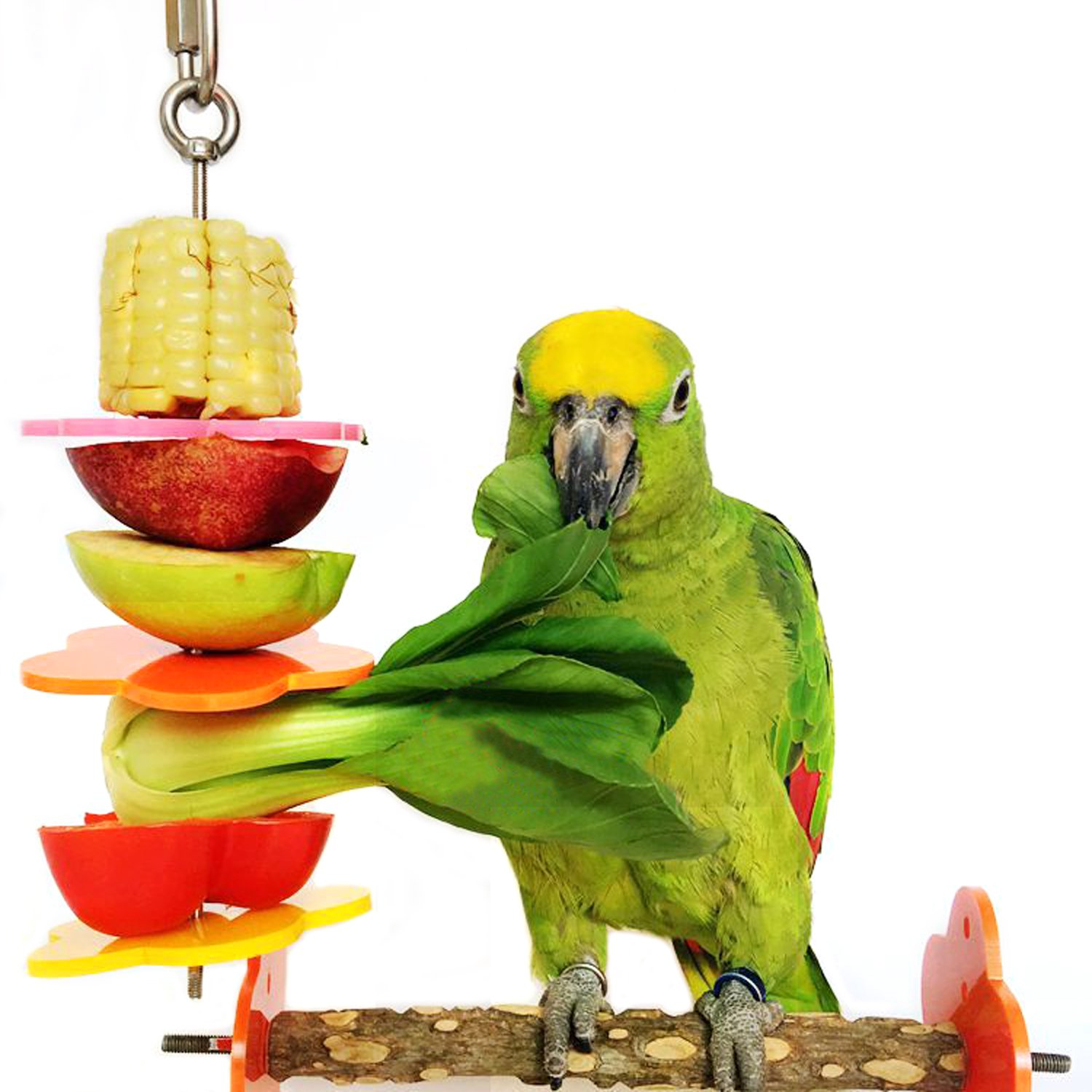 Rypet Bird Skewer,Bird & Small Animals Stainless Steel Fruit Vegetable Holder for Cages, Large