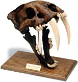 Saber Tooth Tiger Skull w/stand: Tar pit finish