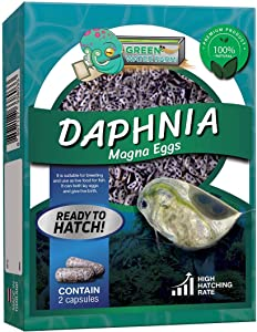 Greenwaterfarm Daphnia Magna Eggs (Water Flea) Live Fish Food for Hatching and Culture Suitable for Feed Betta Fish