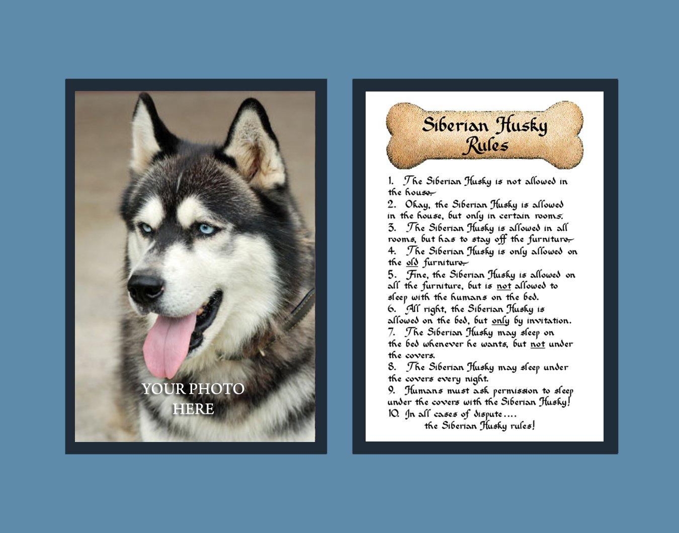 100 100 siberian husky puppies east pomsky puppies for Att nokia mural 6750