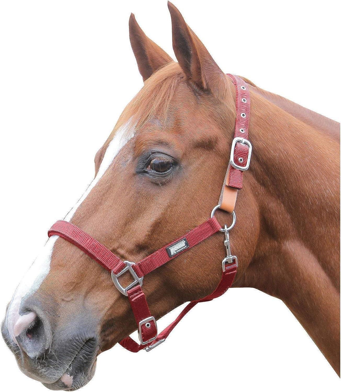 Roma Breakaway Pony//Horse Headcollar