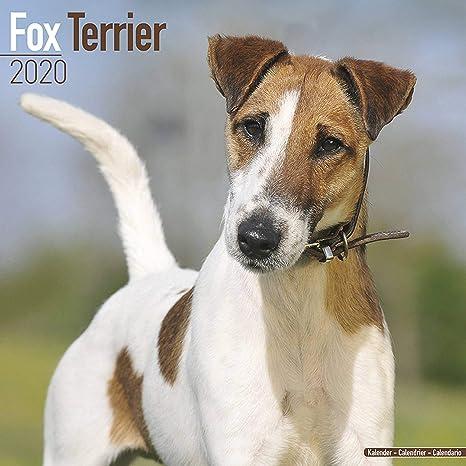 Calendario Fox.Fox Terrier Calendar 2020 Dog Breed Calendar Wall Calendar 2019 2020