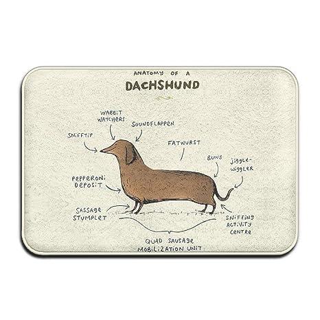 Anatomy of A Dachshund,Entrance Mat,Floor Mat Rug Indoor//Outdoor//Front Door//Bathroom Mats Rubber Non Slip