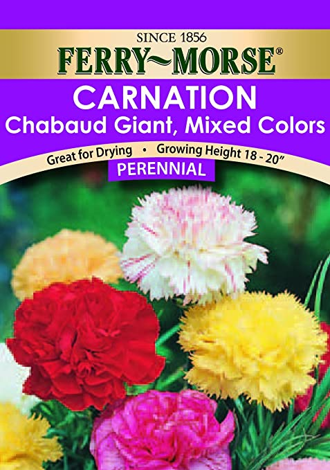 amazoncom ferry morse carnation chabaud giant mixed colors seeds perennial patio lawn garden - Carnation Flower Colors