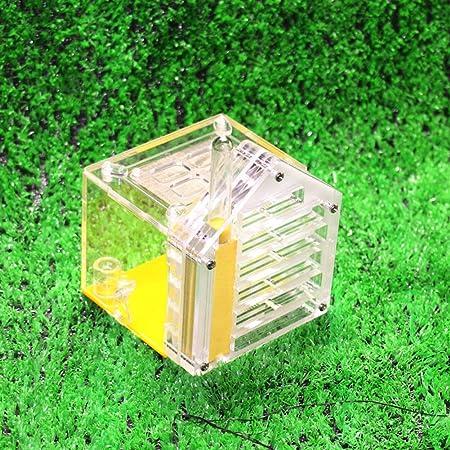Jlxl Bricolaje Ant Nest Nido De Hormigas Acrílico Villa Granja Casa Pantalla De Plástico Caja Cuadrada for La Alimentación: Amazon.es: Hogar