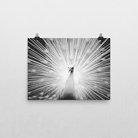 Peacock poster print wall art 11x14 inches black white photography modern home room