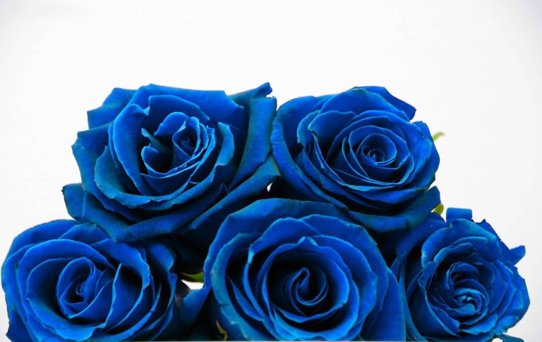Bee Garden Blue Rose Flower Seeds Pack Of 10 Amazon Garden