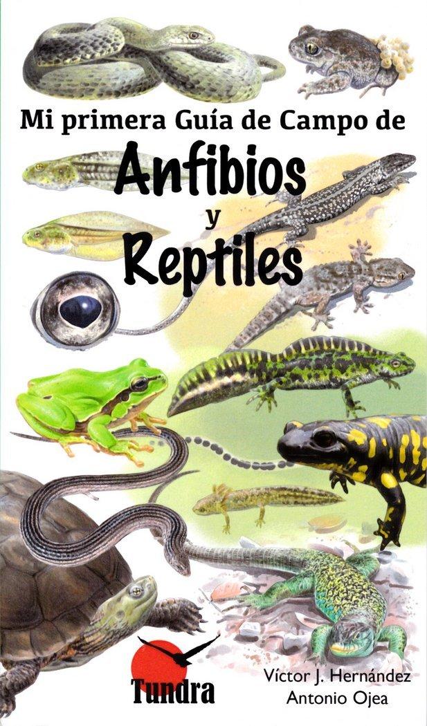 Mi primer guía de campo de anfibios y reptiles: Amazon.es: Ojea Antonio, Ojea Antonio: Libros