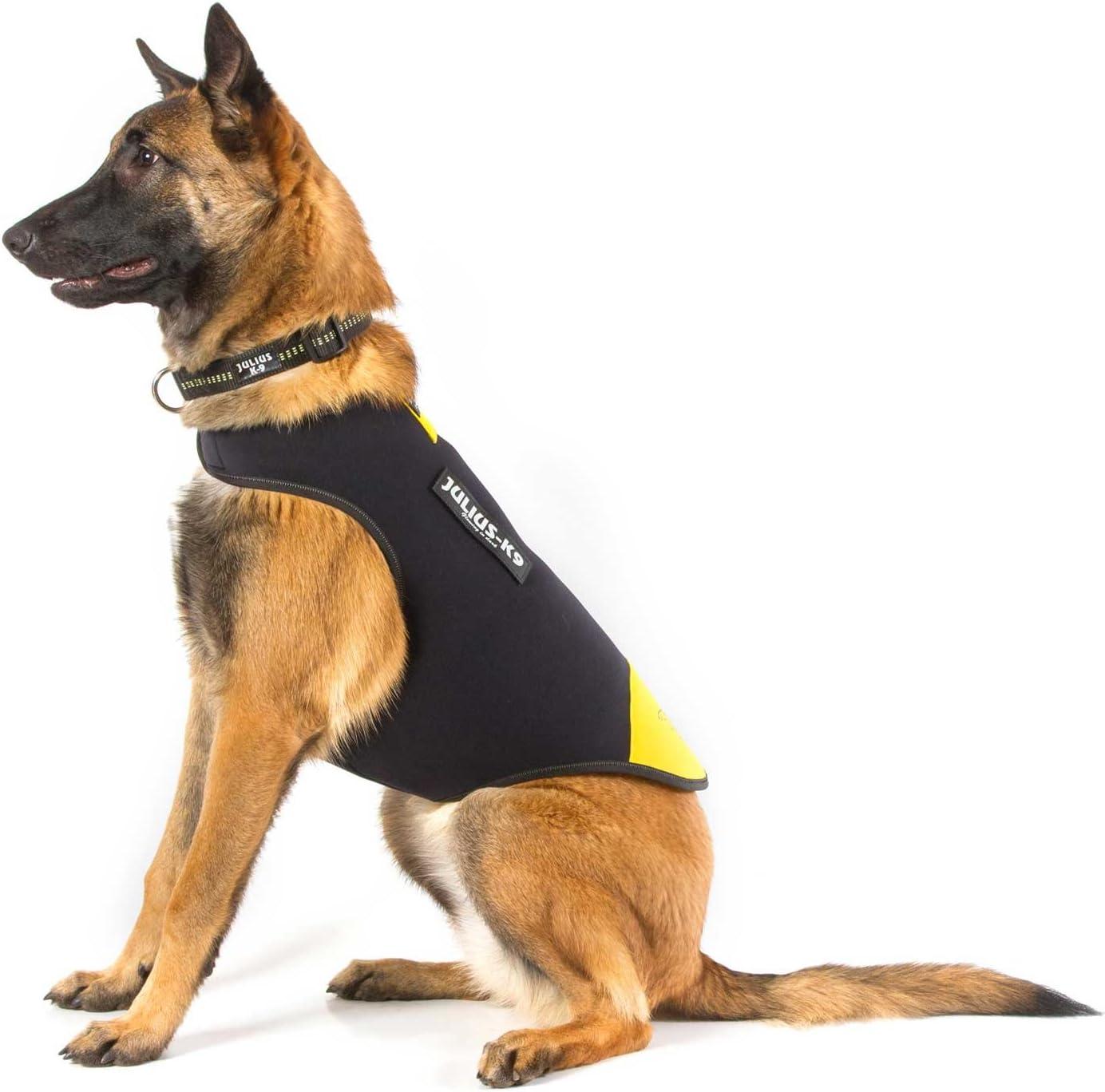 Julius-K9, Chaqueta de neopreno para perro IDC, Talla: L, Negro y ...