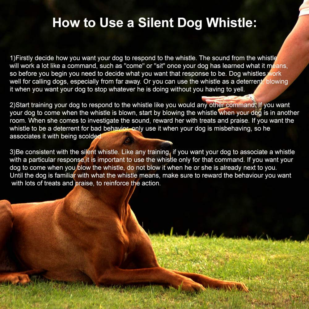 Dog Free Lanydard Strap Dog Whistle Politics Training for Call Silent Bark Control for Dogs 1 Pack Dog Whistle to Stop Barking Ultrasonic Patrol Sound Repellent Repeller