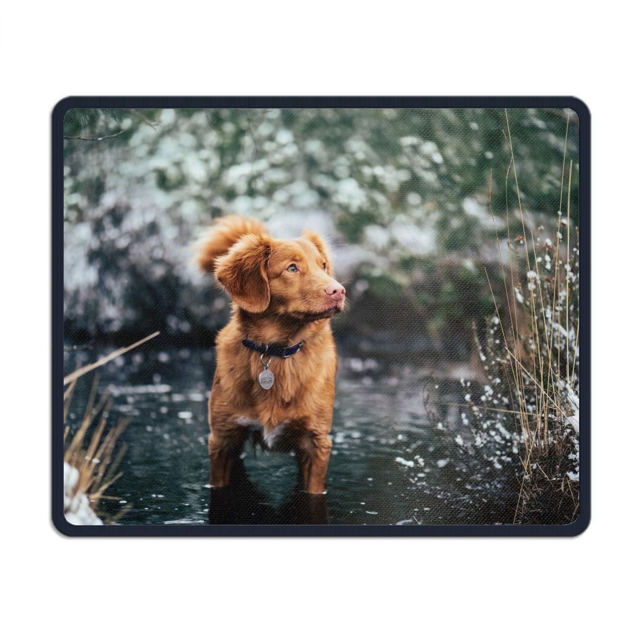 Amazon Com Non Slip Animal Nova Scotia Duck Retriever Dogs Mouse