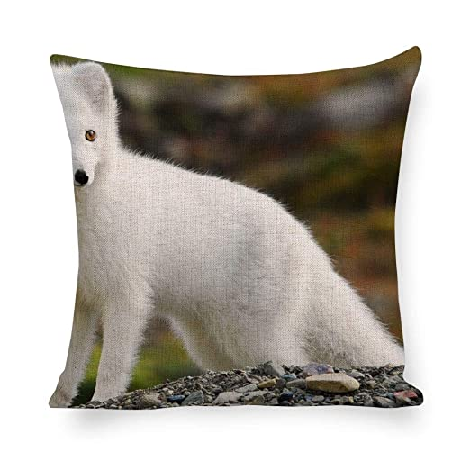 Dartys - Funda para cojín de Pelo Corto Arctic Fox_Animal ...