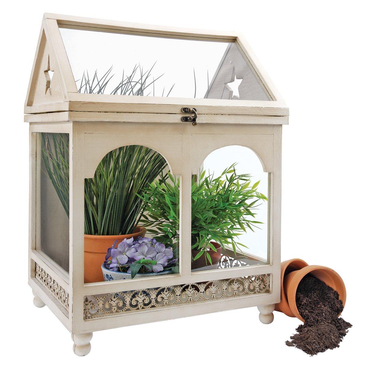 Amazon.com: Design Toscano Wooden Wardian Terrarium Plant Case: Home &  Kitchen - Amazon.com: Design Toscano Wooden Wardian Terrarium Plant Case