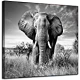 Canvas Wall Art Elephant Picture: African Animals Graphic Artwork Painting Print for Wall Decor(16''x12'')