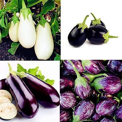 Determina-Planting 200 PCS Mixed Organic Eggplant Vegetable Non-Transgenic Plant Vegetables Seeds: Clothing