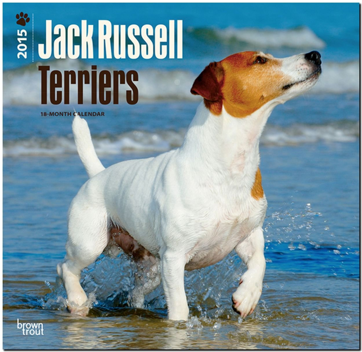 Jack Russell Terriers 2015: Original BrownTrout-Kalender [Mehrsprachig] [Kalender]