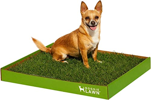 Real-Grass-Dog-Potty-(Disposable)-Medium-20in