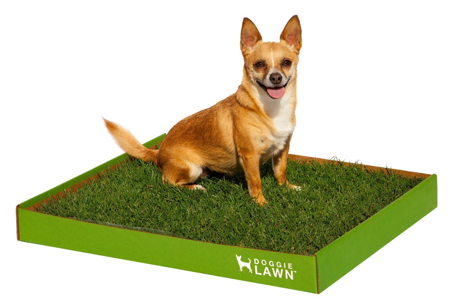 Real Grass Dog Potty (Disposable) - Medium 20in by DoggieLawn