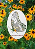 "Oval Butterfly Etched Window Decal Vinyl Glass Cling - White with Clear Design Elements (4"" x 6"")"