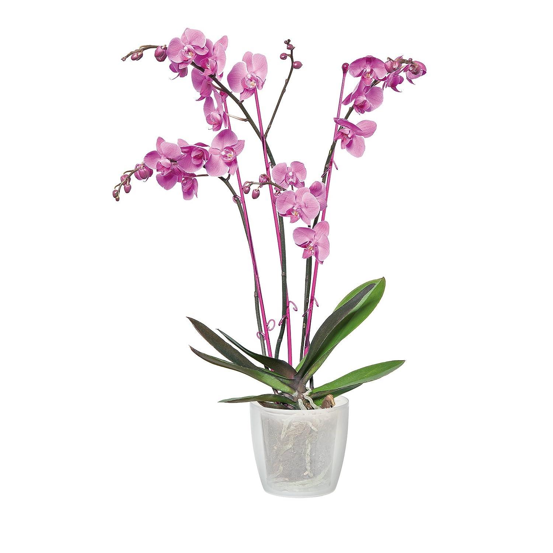 12,7x12,7x15,2 cm Blanco Elho Brussels Orchid High Maceta Alta
