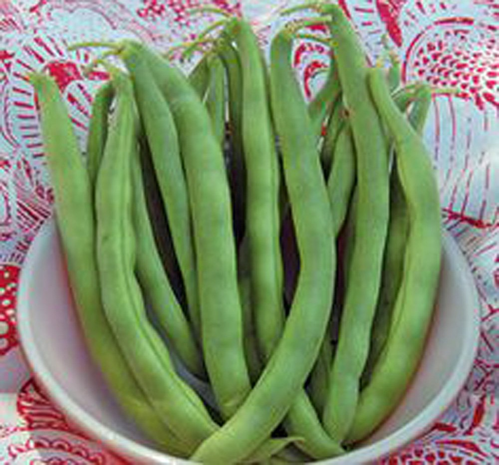 Organic Bean NON-GMO 20+ seeds per package,Hearty Healthy Green Been Pole Kentucky Wonder Seeds