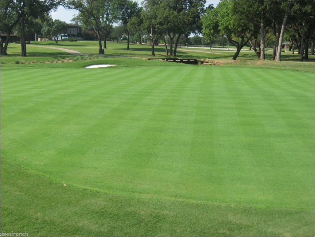 Penncross Bentgrass Seed - 5 Lbs. by SeedRanch (Image #1)