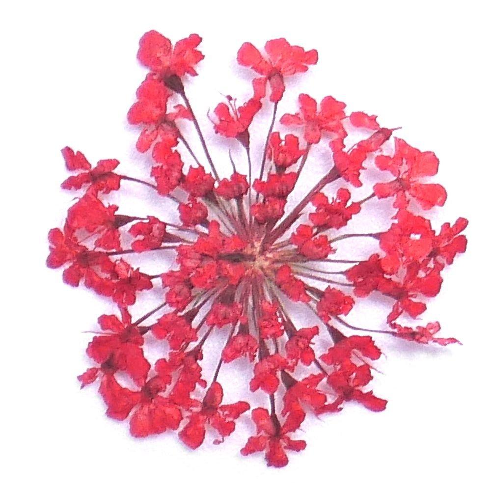 s925 Sterling Silver Thai Silver Flower Earrings earings Dangler Eardrop