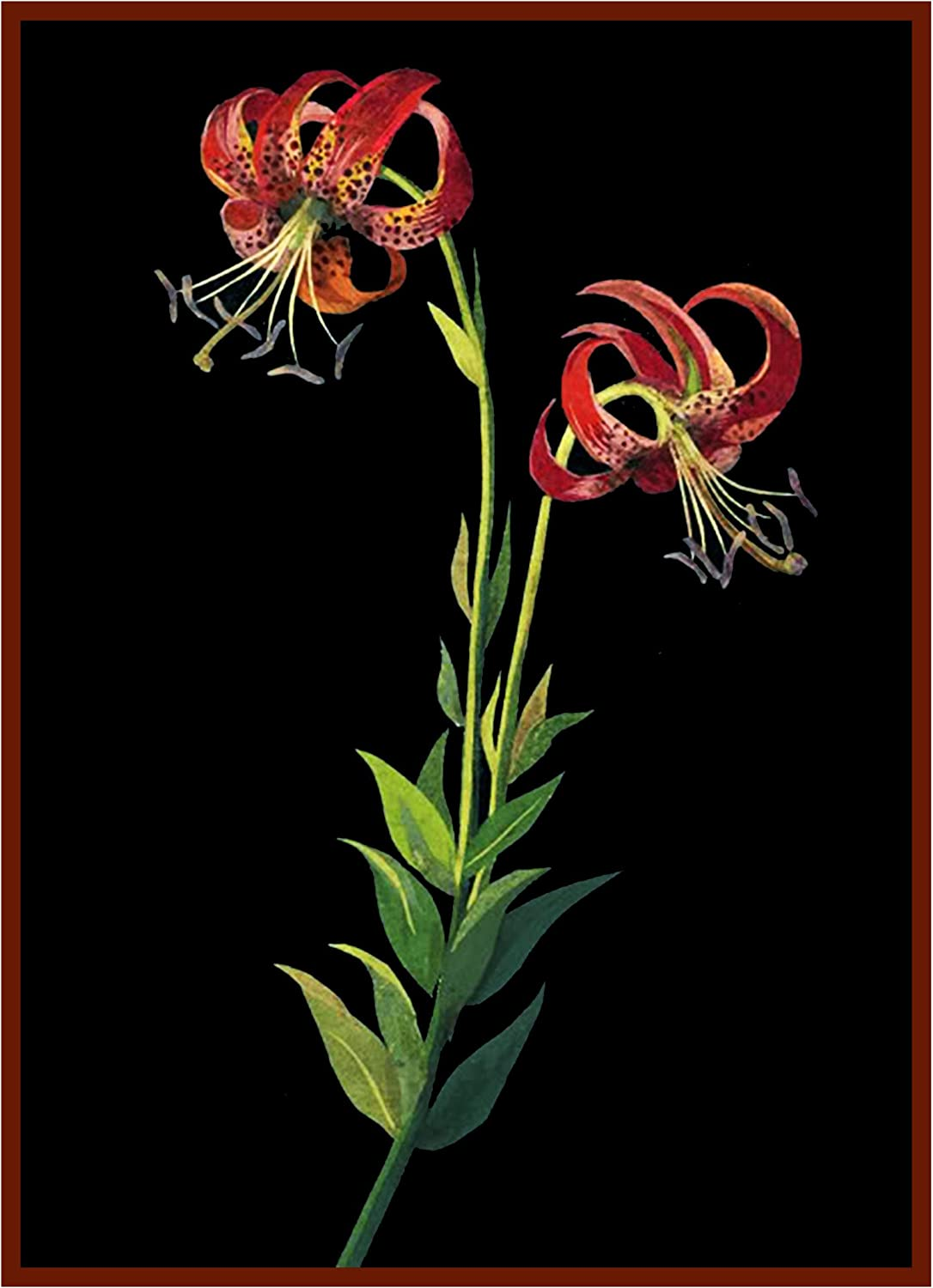 Orenco Originals Tiger Lily Flowers by Mary Delany Counted Cross Stitch Pattern