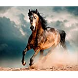DIY 5D Diamond Painting by Number Kits, Full Drill Rhinestone Embroidery Cross Stitch Pictures Arts Craft for Home Wall Decor, Horse 12x16inch