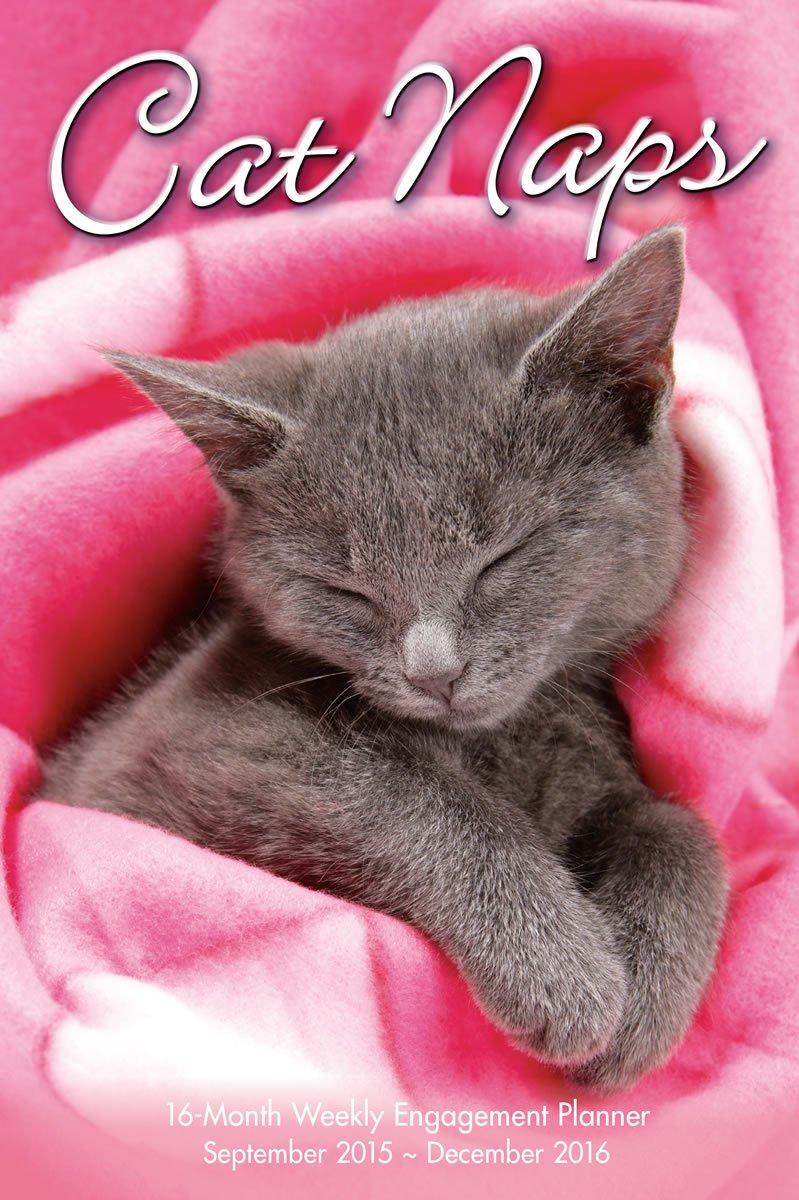 Cat Naps 2016 Engagement Calendar product image