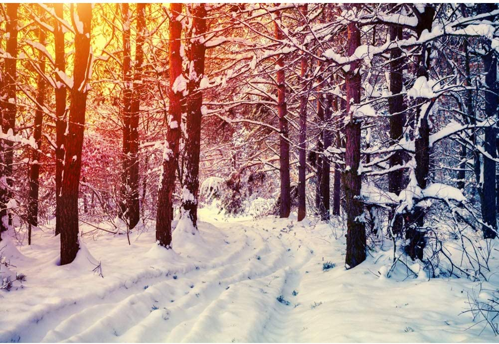 OERJU 15x10ft Winter Forest Backdrop Sunshine Snow Ground Background Thanksgiving Day Decorations Merry Christmas Backdrop Happy New Year Family Portrait Winter Theme Baby Shower Photo Props