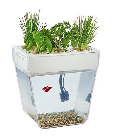 amazon com back to the roots water garden regular live indoor