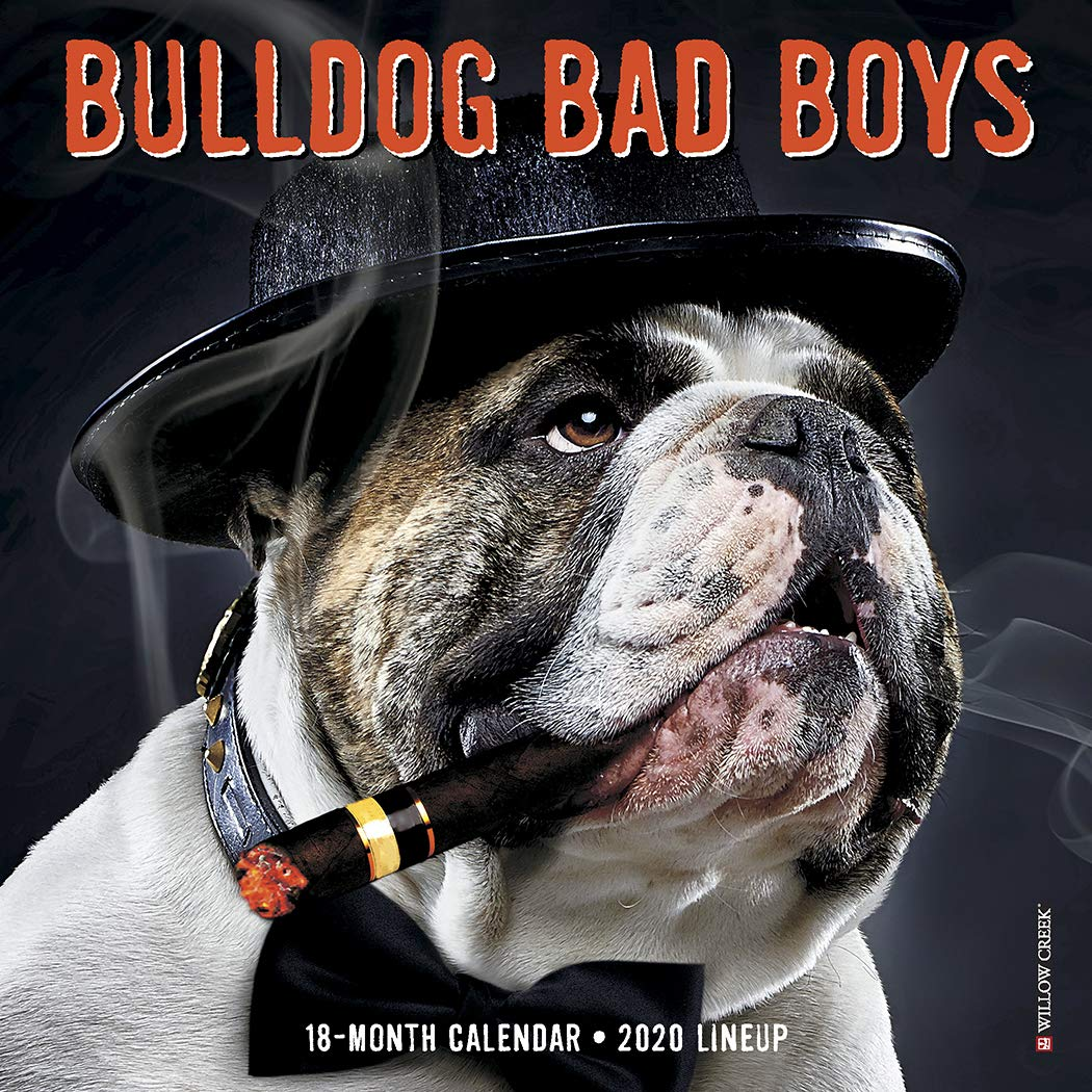 Bulldog Bad Boys 2020 Mini Wall Calendar  Dog Breed Calendar