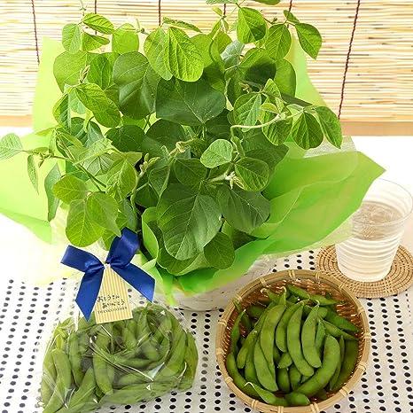 枝豆 収穫