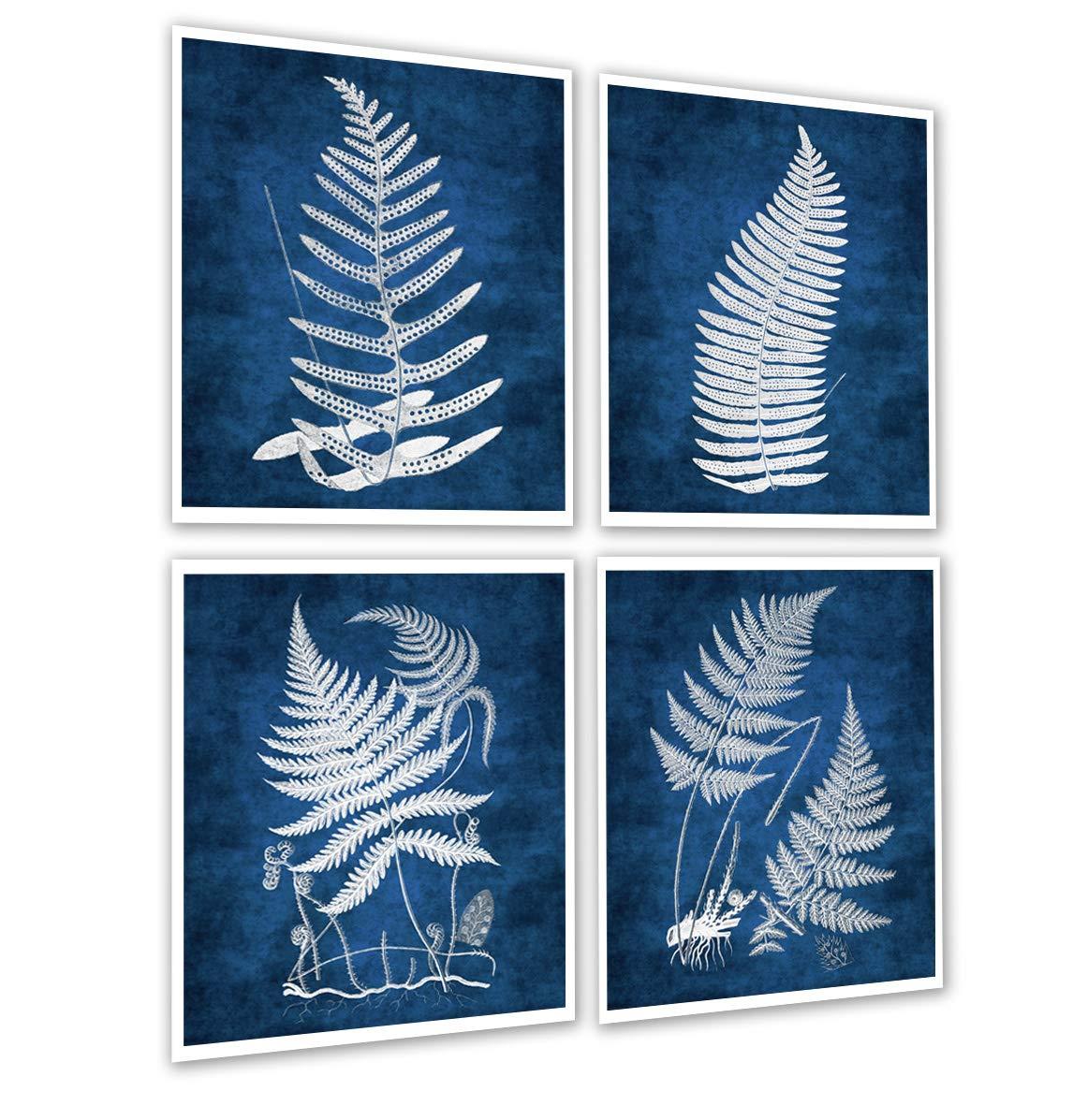 Amazon com gnosis picture archive navy blue fern wall decor print set of 4 unframed wall art botanical fern prints navy blue background