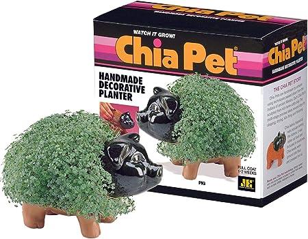 Amazon.com: Chia Pet Pig – 1 cada: Jardín y Exteriores