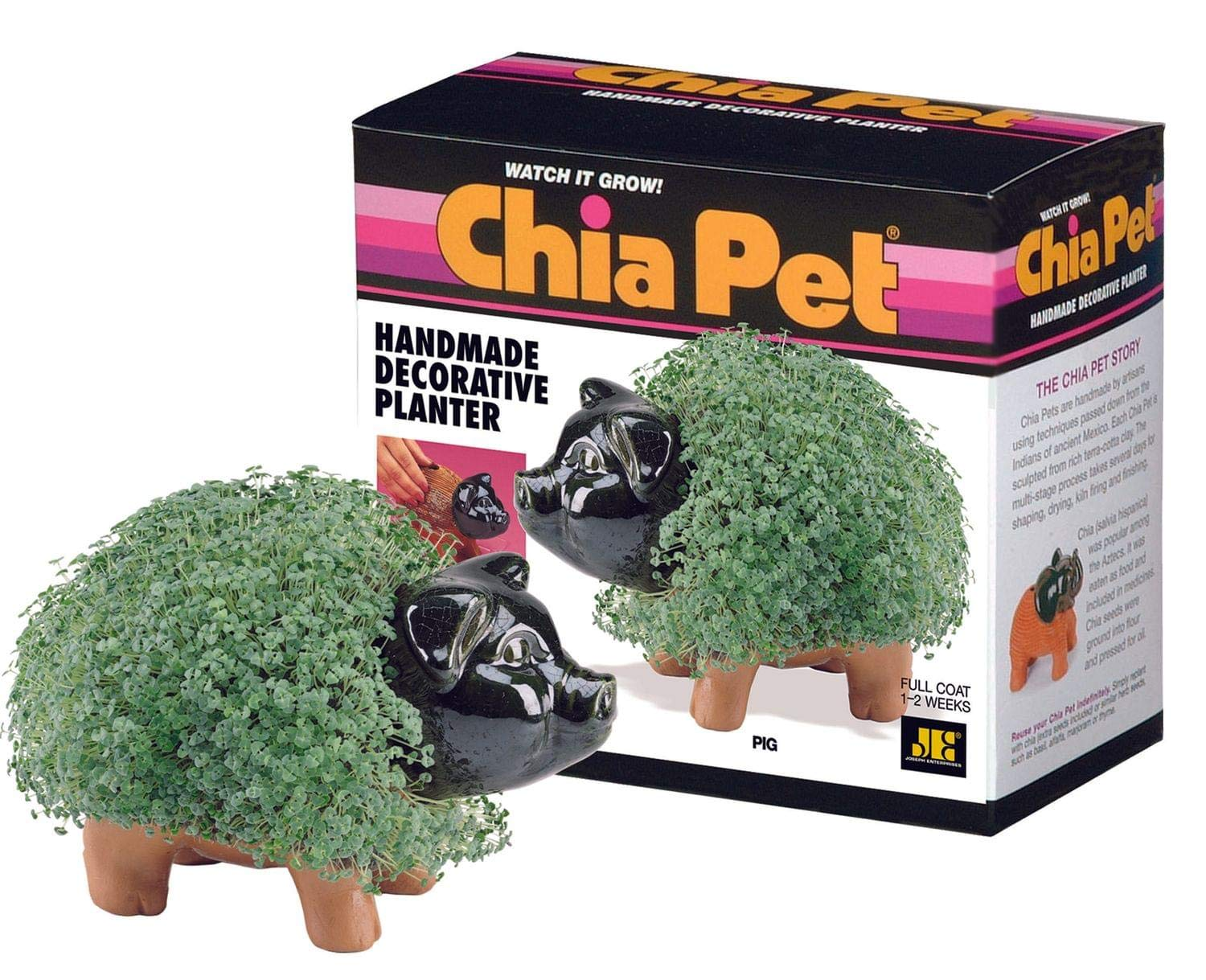 Chia Pet Pig - 1 Each by Chia