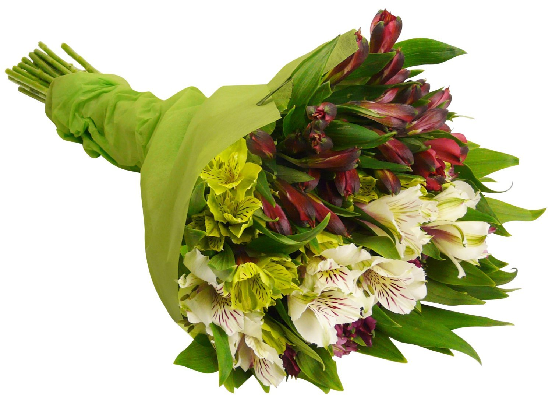 Premium Alstromeria Peruvian Lilies by Eflowerwholesale (100 blooms) by eflowerwholesale