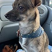 Sicond Collar de Perro peque/ño Ajustable de Nailon Premium para Boda Fiesta Mascotas Collares con Lazo Corbata y Campana de Cuero Collar de Gato Mascota Cachorros
