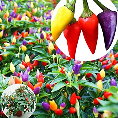 Plant Seeds for Planting 20Pcs Multicolor Chili Seeds Pepper Garden Farm Plant Vegetable Cooking Spice : Garden & Outdoor