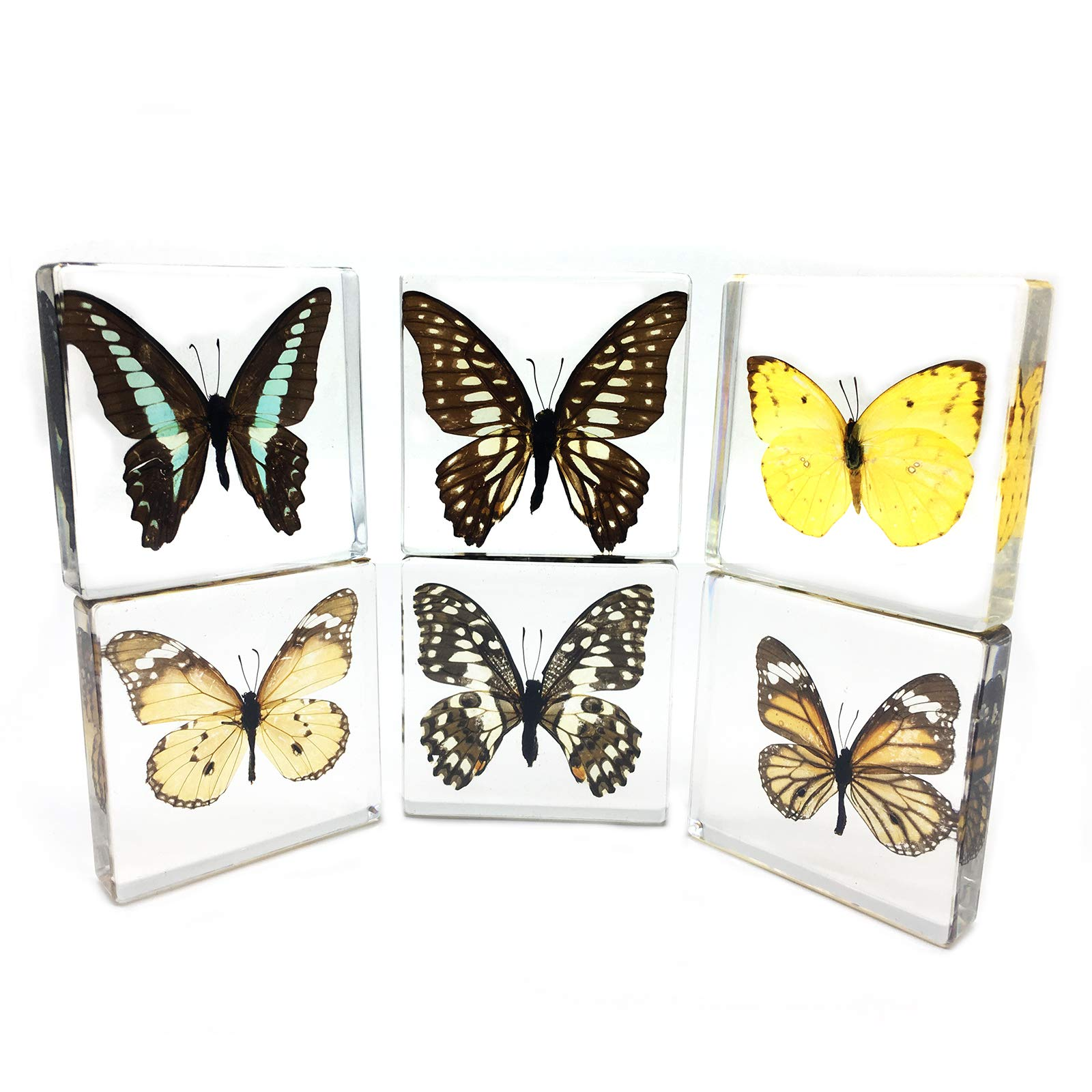 6 PCS Real Butterfly Specimen Specimens Paperweight Paperweights Collection Display (3x3x0.6'')