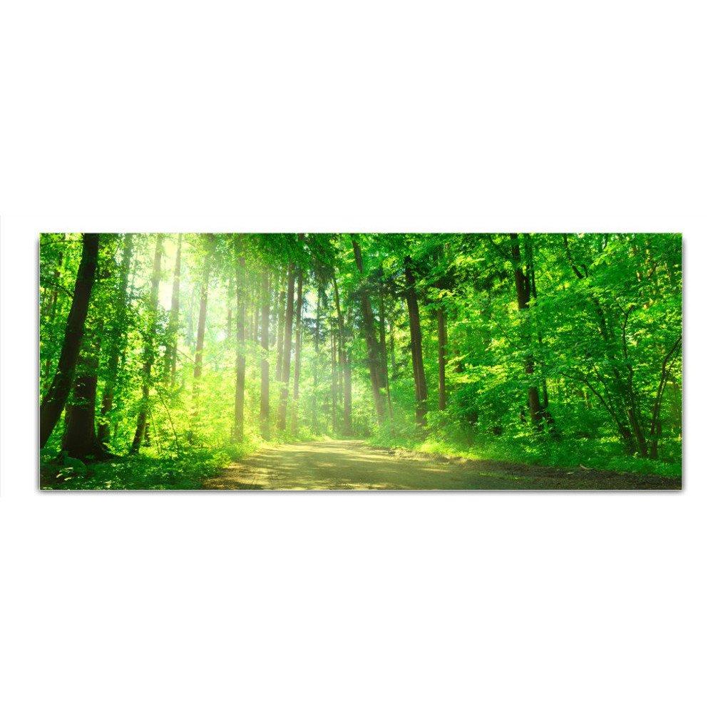 Vetro foto vetro foresta quadro 125 x 50 cm Float DekoGlas