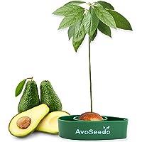 AvoSeedo Kit Jardineria para Aguacate - Gadget Decoracion Casa Y Decoracion Habitacion/Uso Interior o Exterior/Regalos…
