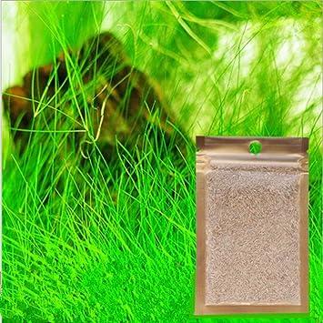 Hoyoo - 1 pieza de semillas acuáticas para acuario, paisaje, pequeñas grandes hojas,