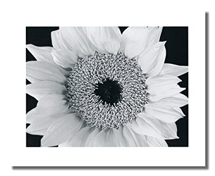 Sunflower close up black and white photo wall picture 8x10 art print