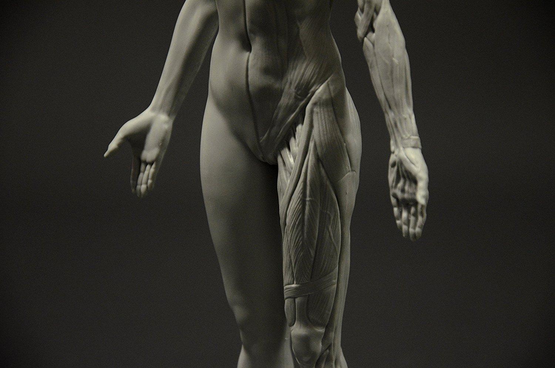 Figura anatomía de una mujer: paleta de albañil, 28 cm, figura de ...