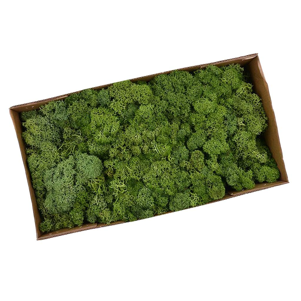 DYNWAVE Natural Norwegian Reindeer Moss Preserved Dried Crafts Flower for Flowers Grass Plants Home Garden Garland Wedding Party - Yellow Green by DYNWAVE (Image #7)