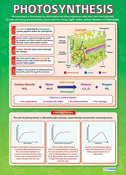 Waves | Science Charts for The Classroom A1 Science Posters Gloss Paper Measuring 850mm x 594mm Education Charts by Daydream Education